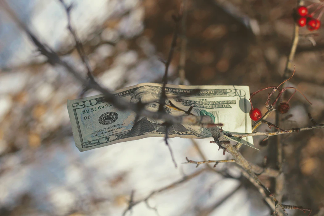 a 20 dollar note stuck in a tree